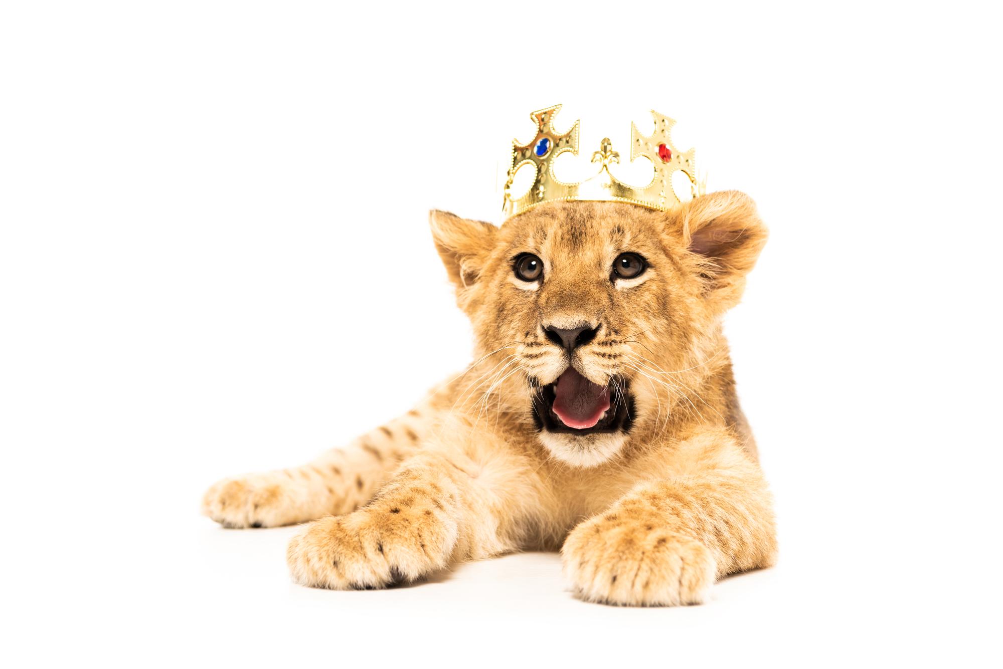 PEP in crown